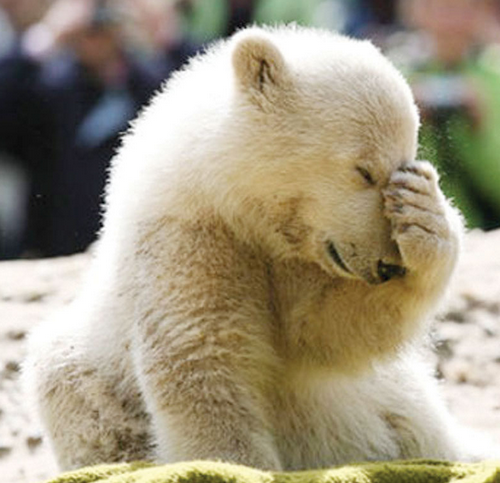 facepalm-bear-2